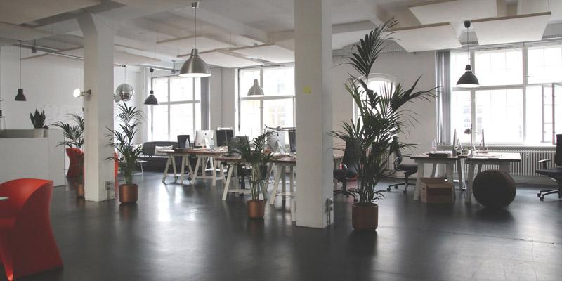 biophilic office design